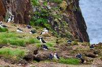 The Puffins 2018